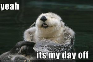 otter-day-off