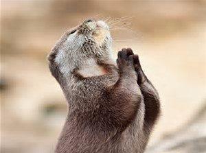 praying varmit